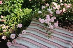 Pled Madera beżowo-różowy